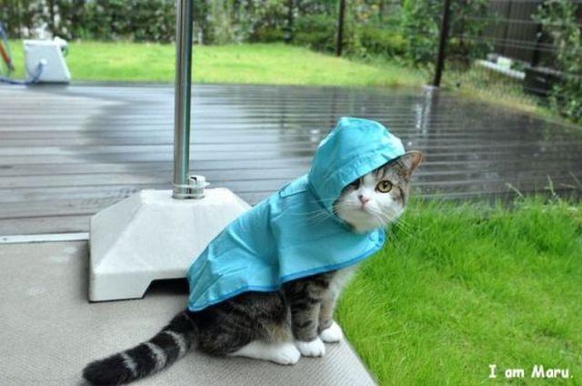 Katze mit Regenjacke