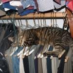 Katze schläft auf Kleiderbügeln