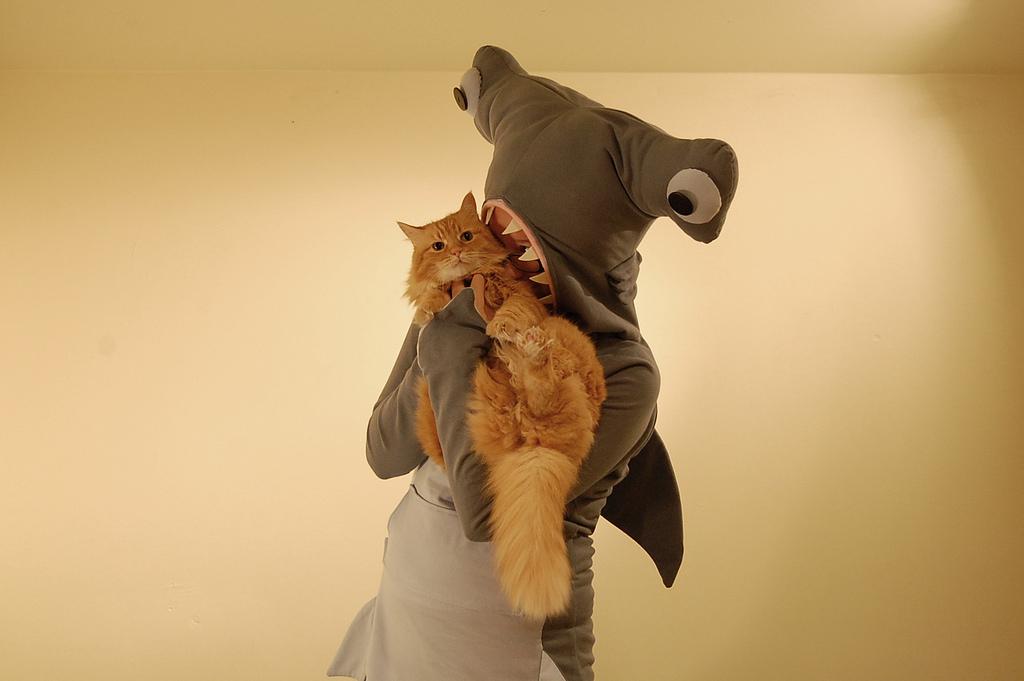 Hammerhai-Kostüm und Katze