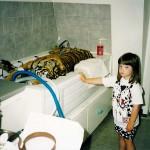 Tiger wird operiert