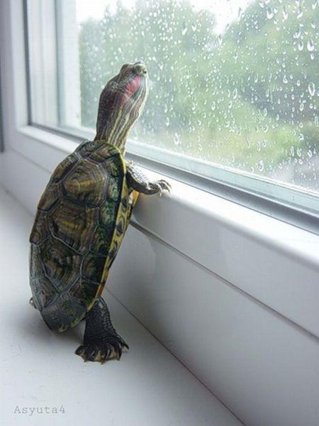 Schildkröte am Fenster
