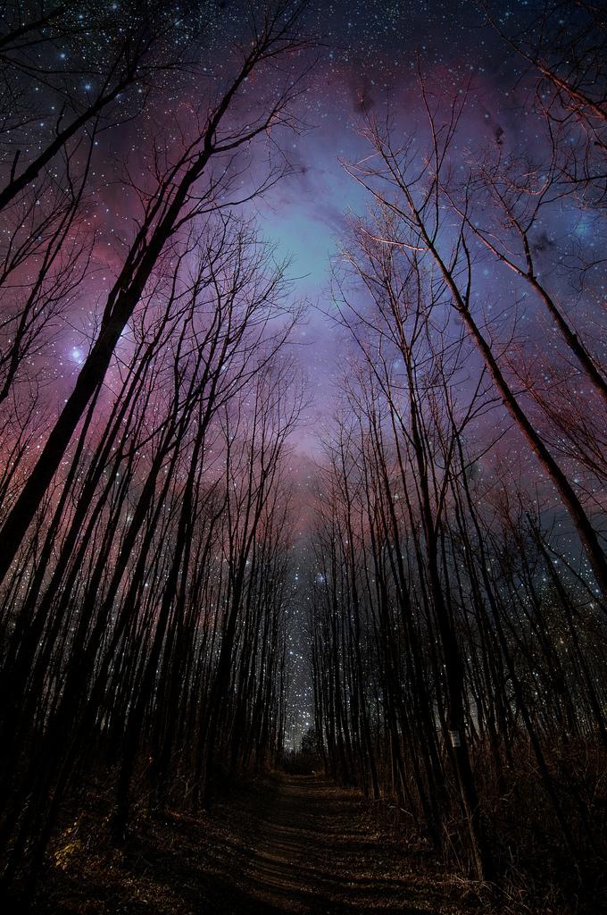 Bäume und Sternenhimmel
