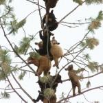 Baum voller Bären