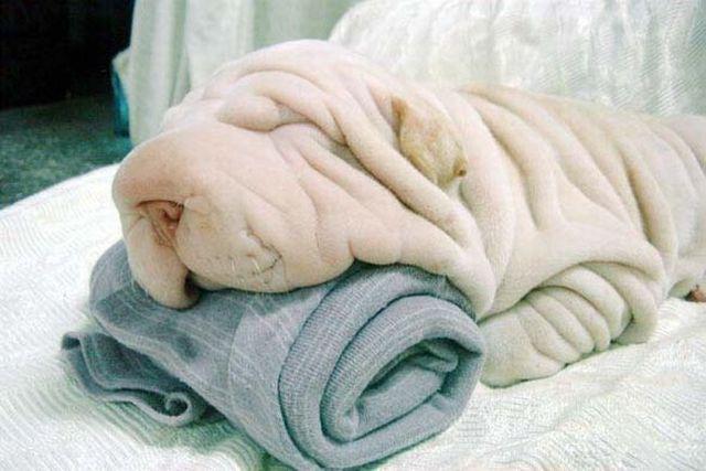 Hund und Handtuch
