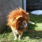 Mini Löwe