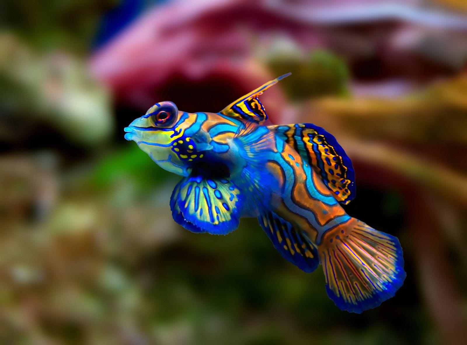Bunter fisch bunte bilder for Fisch bilder