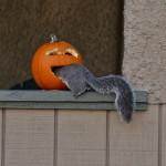 Kürbis und Eichhörnchen