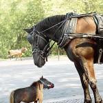 Kleines und großes Pferd