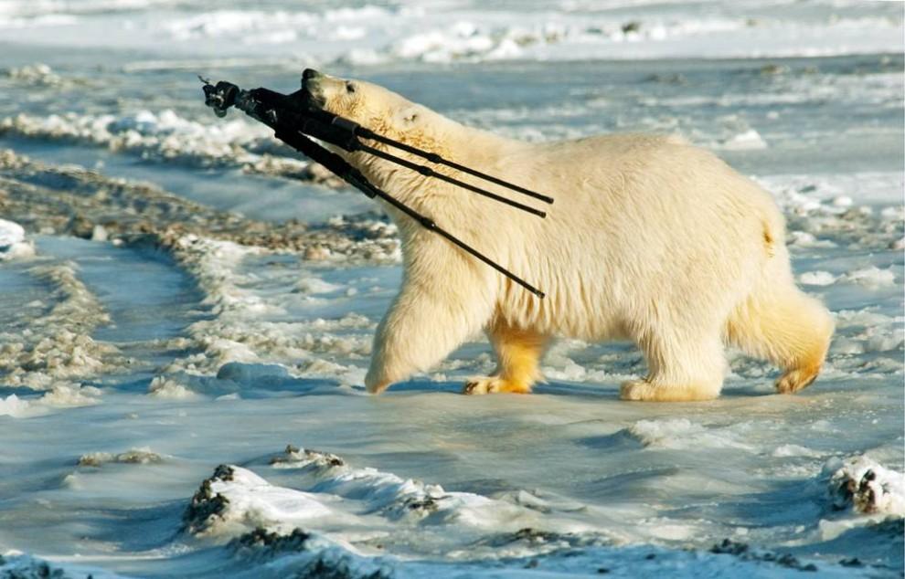 Eisbär klaut Kamera