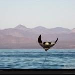 manta-ray-leap-skerry-1070447-xl