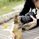 Affe mit Kamera