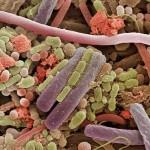 Bakterien auf einer Zunge