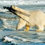Eisbär mit Kamerastativ