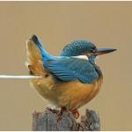 Vogelschiss