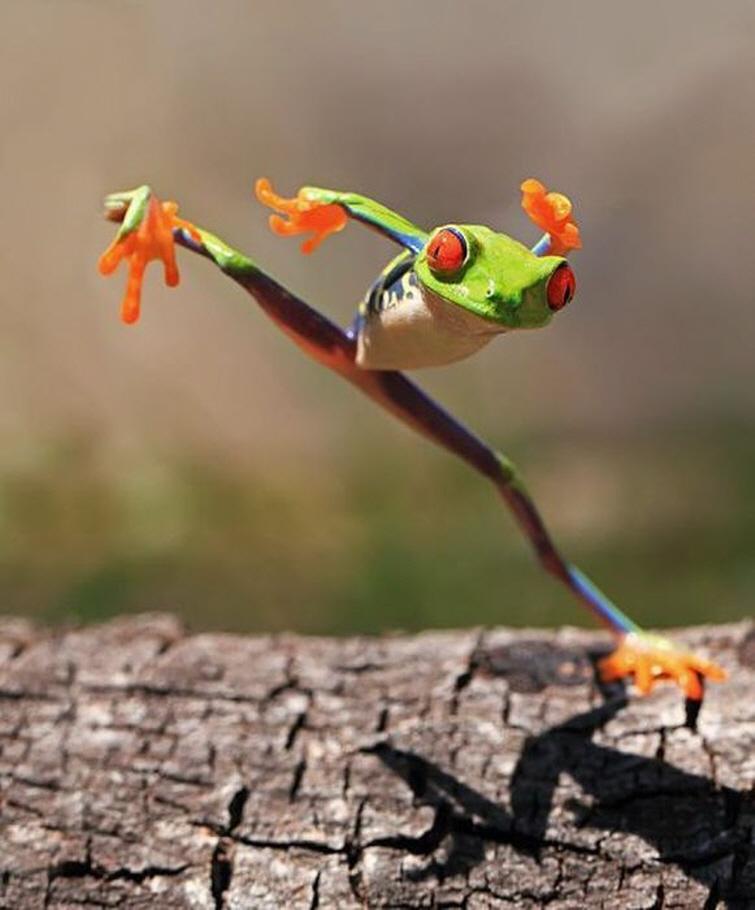 Kung Fu Frosch