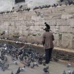 Tauben, Mann und Katze