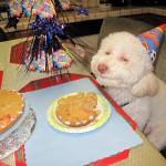 Geburtstagshund