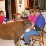 buffalo_03