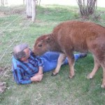 buffalo_04