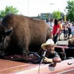 buffalo_11