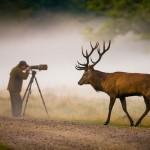 Hirsch und Fotograf