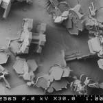 microscope-snow21