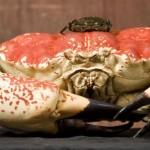 giant-crab-4