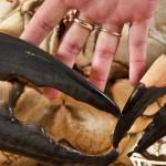 giant-crab-5
