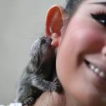 Kleiner Affe beisst Ohr