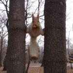 Eichhörnchenakrobatik