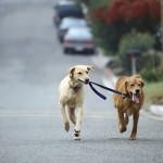 Hund geht mit Hund Gassi