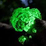 Leuchtender Pilz
