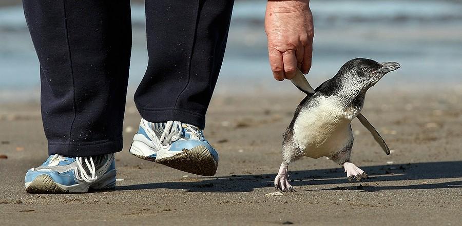 Mensch und Pinguin