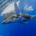 Wal und Mensch