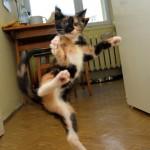Karatekatze