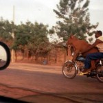 Motorrad-Kuh