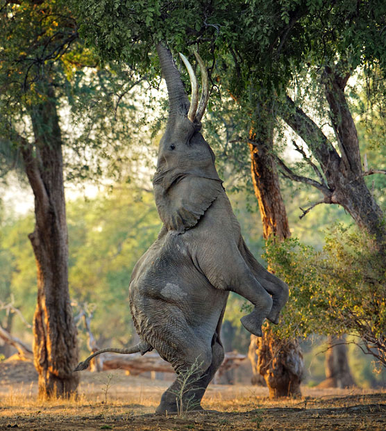 Elefantenballett