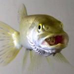 Fisch im Fisch