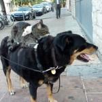 Maus reitet auf Katze reitet auf Hund