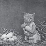 Harry_Whittier_Frees_-_Mrs._Bufkins_Finds_Plenty_of_Eggs