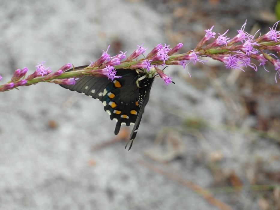 Spinne frisst Schmetterling