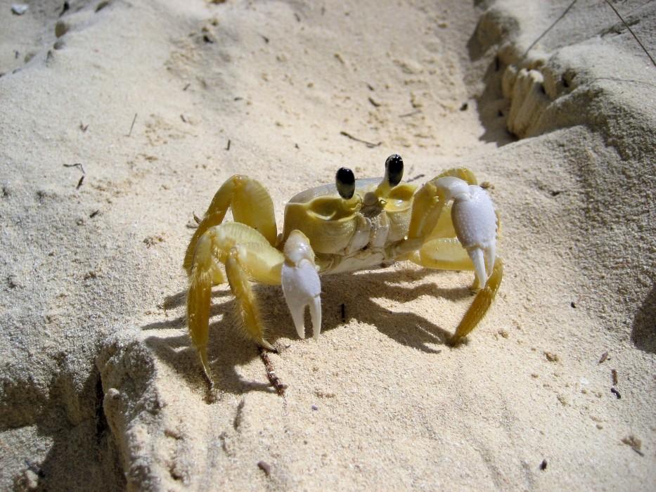 Freundliche Krabbe