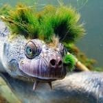 turtle_02