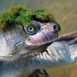 turtle_05