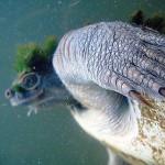 turtle_07