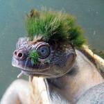 turtle_08