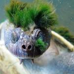 turtle_12