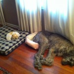Hunde tauschen Betten