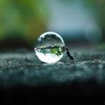 Ameise schiebt einen Wassertropfen