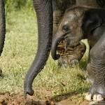 Ramzar, der Babyelefant